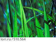 Купить «Утренняя роса», фото № 510564, снято 21 мая 2018 г. (c) andros / Фотобанк Лори
