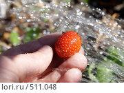 Купить «Спелая клубника в руках на фоне брызг воды», фото № 511048, снято 10 августа 2008 г. (c) Игорь Романов / Фотобанк Лори