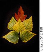 Пасьянс из листьев. Стоковое фото, фотограф Татьяна Лепилова / Фотобанк Лори