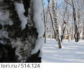 Купить «Заснеженный березовый парк», фото № 514124, снято 17 февраля 2007 г. (c) Yevgeniy Zateychuk / Фотобанк Лори