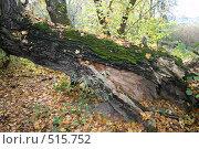 Осыпается листва. Стоковое фото, фотограф Александр Бутенко / Фотобанк Лори