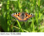 Купить «Бабочка», фото № 516088, снято 27 августа 2004 г. (c) Сергей Бехтерев / Фотобанк Лори