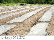 Купить «Грядки под пленкой», фото № 518272, снято 3 июня 2008 г. (c) Vladimir Kolobov / Фотобанк Лори