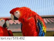 Купить «Попугай», фото № 519492, снято 9 июня 2007 г. (c) Мария Левочкина / Фотобанк Лори