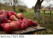 Купить «Красные яблоки на садовом столе», фото № 521456, снято 18 октября 2008 г. (c) Yevgeniy Zateychuk / Фотобанк Лори