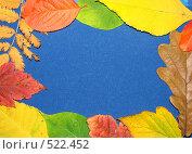 Купить «Рамка из осенних листьев», фото № 522452, снято 11 октября 2008 г. (c) Кардаполова Наталья / Фотобанк Лори
