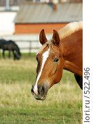 Голова лошади. Стоковое фото, фотограф Татьяна Тимофеева / Фотобанк Лори