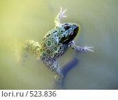 Купить «Лягушка в пруду», фото № 523836, снято 17 сентября 2008 г. (c) Ирина Андреева / Фотобанк Лори