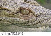 Крокодил. Стоковое фото, фотограф Антон Коршунов / Фотобанк Лори