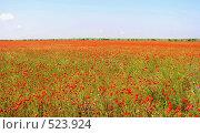 Маковое поле. Стоковое фото, фотограф Антон Коршунов / Фотобанк Лори