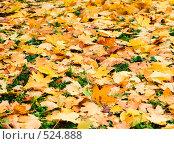 Осень, желтые листья на траве, фон, фото № 524888, снято 25 октября 2008 г. (c) Андрей Зык / Фотобанк Лори
