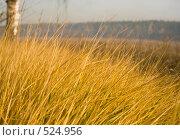 Купить «Сухая осенняя трава», фото № 524956, снято 8 октября 2008 г. (c) Юрий Бельмесов / Фотобанк Лори