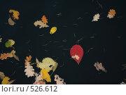 Купить «Осенние листья на черной воде», фото № 526612, снято 28 октября 2007 г. (c) Cangaroo / Фотобанк Лори