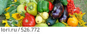 Купить «Овощи», фото № 526772, снято 23 августа 2008 г. (c) Глеб Тропин / Фотобанк Лори