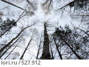 Купить «Кроны деревьев, уходящие в осеннее небо», фото № 527912, снято 19 октября 2008 г. (c) Игорь Гришаев / Фотобанк Лори