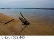 Купить «Бревно», фото № 529440, снято 23 октября 2008 г. (c) Максим Солдатов / Фотобанк Лори