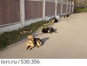 Купить «Бродячие собаки на отдыхе», фото № 530356, снято 28 октября 2008 г. (c) Андрей Ерофеев / Фотобанк Лори