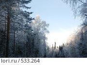 Зимний лес. Стоковое фото, фотограф Вячеслав Зитев / Фотобанк Лори