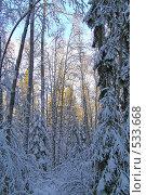 Купить «Новогодний пейзаж», фото № 533668, снято 1 января 2005 г. (c) Галина Бурцева / Фотобанк Лори