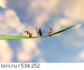 Купить «Три муравья на ветке - три богатыря», фото № 534252, снято 3 июня 2006 г. (c) Сергей Губенко / Фотобанк Лори