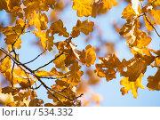 Листва. Стоковое фото, фотограф Алексей Хабазов / Фотобанк Лори