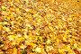 Опавшие листья, фото № 537540, снято 25 февраля 2017 г. (c) Роман Сигаев / Фотобанк Лори