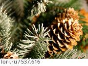 Купить «Ветка новогодней елки с шишками», фото № 537616, снято 5 ноября 2007 г. (c) Логинова Елена / Фотобанк Лори