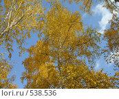 Золотая осень. Стоковое фото, фотограф Нина Галкина / Фотобанк Лори