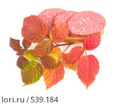Купить «Осенний бутерброд», фото № 539184, снято 18 октября 2018 г. (c) Коннов Леонид Петрович / Фотобанк Лори
