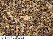 Фон из сухих листьев. Стоковое фото, фотограф Иванов Александр Сергеевич / Фотобанк Лори