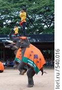 Купить «Представление слонов. Таиланд», фото № 540016, снято 29 октября 2008 г. (c) E. O. / Фотобанк Лори