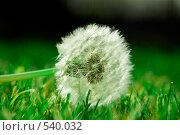 Одуванчик на зеленой траве. Стоковое фото, фотограф Евгений Жминько / Фотобанк Лори