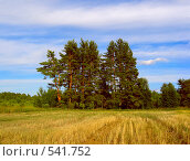 Купить «Урожай собран», фото № 541752, снято 17 июля 2006 г. (c) Вадим Кондратенков / Фотобанк Лори