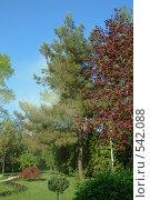 Купить «Пыльца сдуваемая ветром», фото № 542088, снято 3 мая 2008 г. (c) Игорь Шаталов / Фотобанк Лори