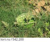 Купить «Так растёт арбуз», фото № 542200, снято 26 июля 2007 г. (c) Сергей Карцов / Фотобанк Лори