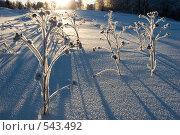 Зимний пейзаж. Стоковое фото, фотограф Наталья Наточина / Фотобанк Лори