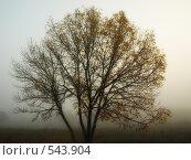 Дерево. Стоковое фото, фотограф Антон Коршунов / Фотобанк Лори