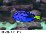 Под водой. Стоковое фото, фотограф Алексей Хабазов / Фотобанк Лори