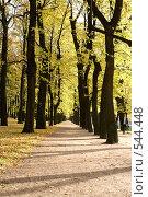 Купить «Осенняя аллея в парке», фото № 544448, снято 9 октября 2008 г. (c) Андрюхина Анастасия / Фотобанк Лори