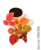 Купить «Чай и листья малины», фото № 544556, снято 18 октября 2018 г. (c) Коннов Леонид Петрович / Фотобанк Лори