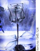 Купить «Роза Кая», фото № 545124, снято 16 сентября 2007 г. (c) Барабанов Максим Олегович / Фотобанк Лори