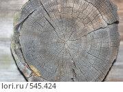Купить «Текстура дерево», фото № 545424, снято 3 ноября 2008 г. (c) Юрий Винокуров / Фотобанк Лори
