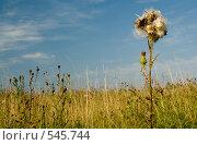 Купить «Августовский взрыв», фото № 545744, снято 21 августа 2008 г. (c) Юрий Беляков / Фотобанк Лори