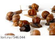 Купить «Взвод! Стройся! chief of snails», фото № 546044, снято 23 апреля 2008 г. (c) Мирослава Безман / Фотобанк Лори