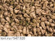 Купить «Урожай сахарной свеклы», фото № 547920, снято 4 октября 2008 г. (c) Андрей Короткевич / Фотобанк Лори