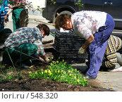 Купить «Женщины сажают цветы на клумбу в Коломенском парке», эксклюзивное фото № 548320, снято 5 мая 2008 г. (c) lana1501 / Фотобанк Лори