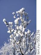 Заснеженная ветка на фоне синего неба. Стоковое фото, фотограф Алексей Семенов / Фотобанк Лори