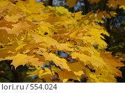 Листья клёна. Стоковое фото, фотограф Власов Виктор Валентинович / Фотобанк Лори