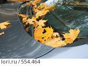 Купить «Желтые листья на автомобиле», фото № 554464, снято 22 января 2019 г. (c) severe / Фотобанк Лори