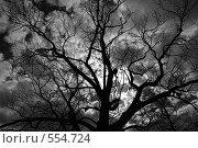 Ветки дерева без листьев на фоне грозового облака. Стоковое фото, фотограф Алексей Семенов / Фотобанк Лори